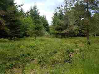 MLS# 200258 Address: Unimproved lot off Lake Earl Drive